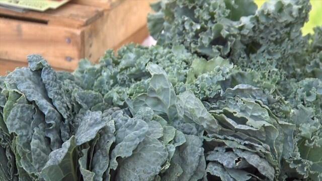 Food-trends-pix---green-leafy-.jpg_24135284