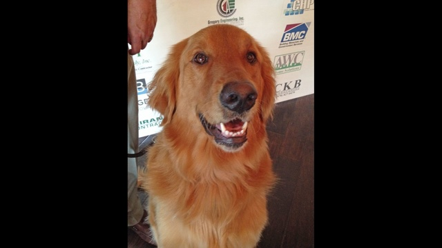 K9s for Warriors graduate dog