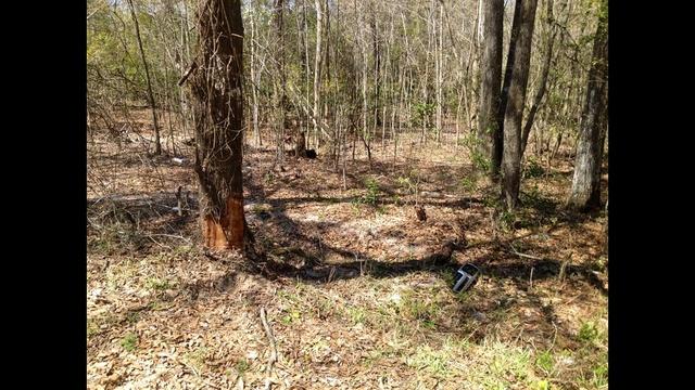 Middleburg crash scene