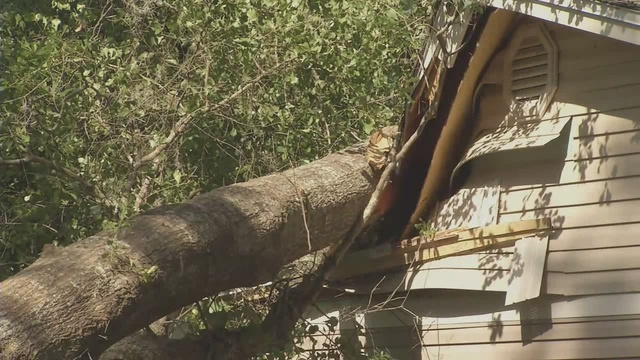 Tree falls on house in Callahan