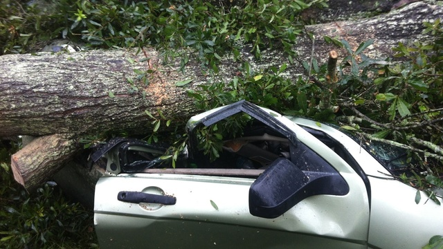 Tree-on-Car-close.jpg_27592400
