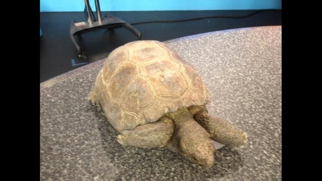 emmet-tortoise-JPG.jpg_26842442