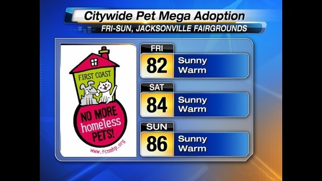 Mega Pet Adoption Forecast