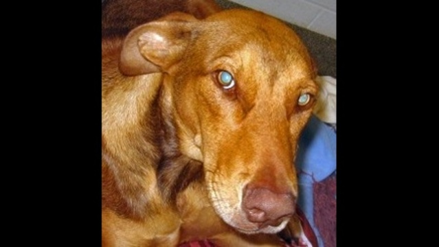 DogShotInShoulder-jpg.jpg_17442144