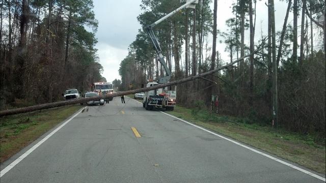 fallen-tree-January-jpg.jpg_19019244