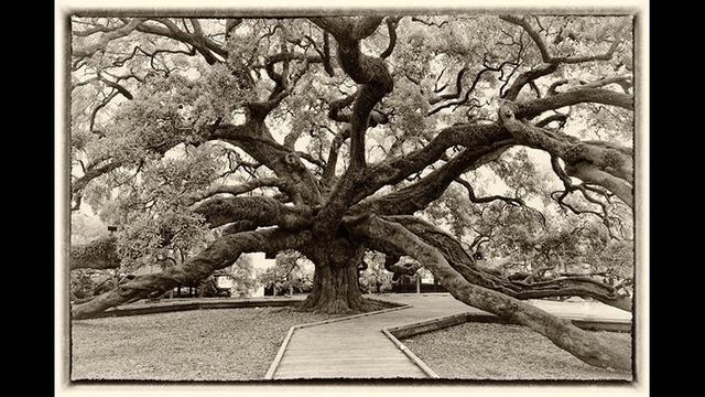 oaktree2-jpg--1-.jpg_20186572