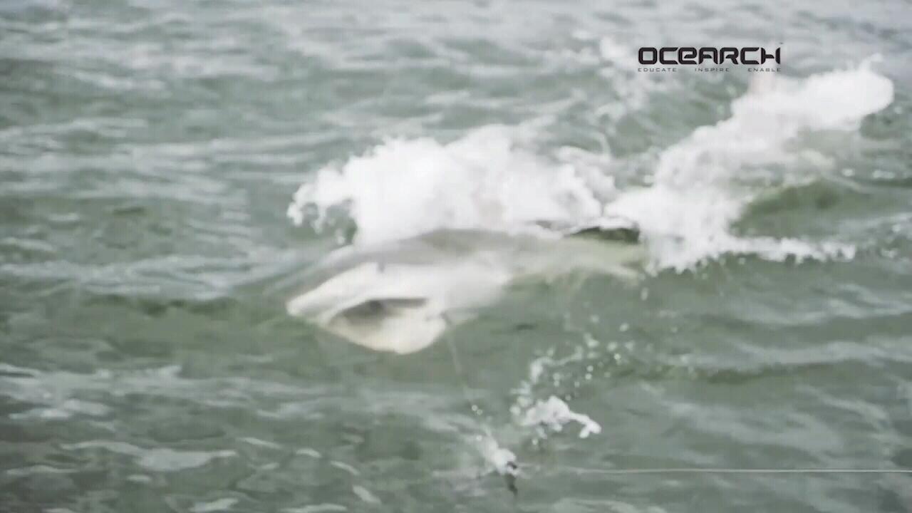 3-week shark search a success in Fla