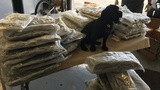 K9 sniffs out 72 bags of marijuana