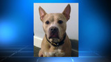Officer's dog missing after home burglary in Murray Hill