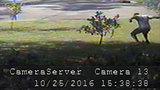 Man caught on camera trashing Trump yard sign