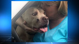 Jacksonville officer reunited with his dog after burglary