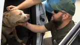 Burglarized officer's missing dog found alive