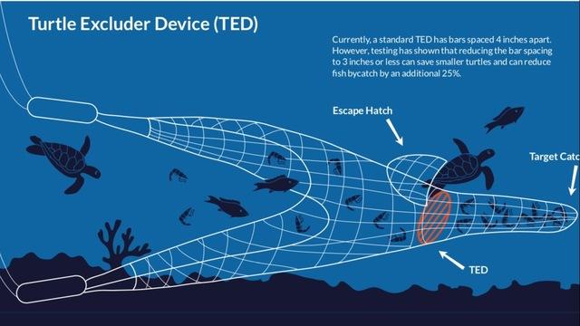 Image result for shrimp boat TED