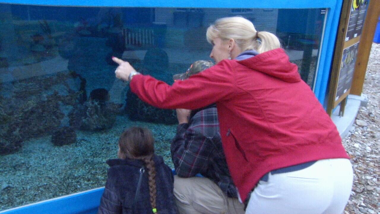 St Augustine Aquarium Takes Visitors Under The Sea