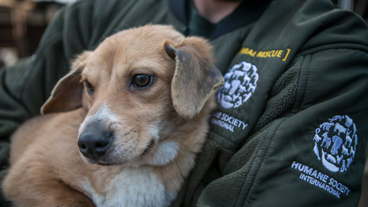 Dogs once headed for slaughter now up for adoption in Florida