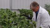 Farm ready to take on new frontier of medical marijuana