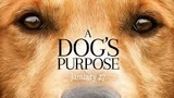 'A Dog's Purpose' movie under investigation for animal abuse