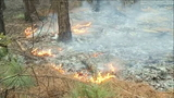 Wildfire in Flagler County