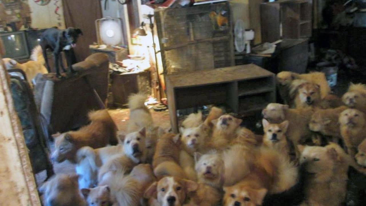Hump Day Dog Show