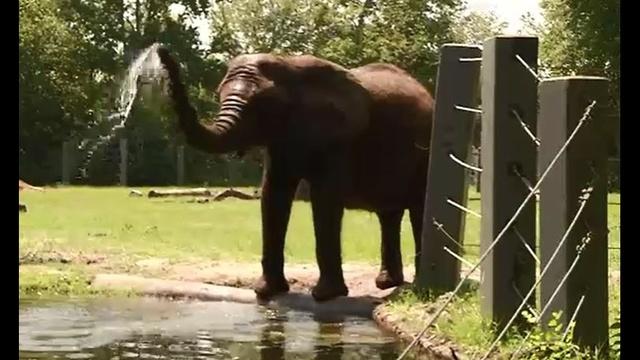 Elephant-at-zoo-JPG.jpg_34301312