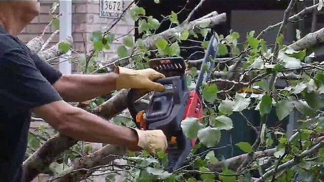 Chainsaw-trees.jpg_26955924
