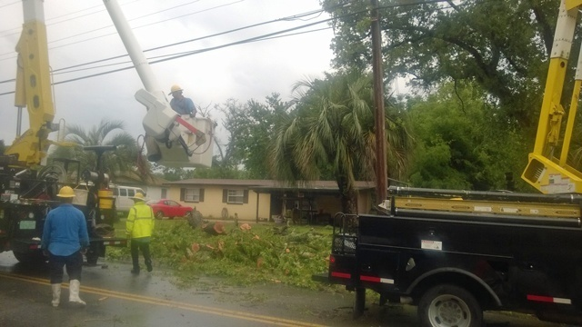 Trees down_25760620