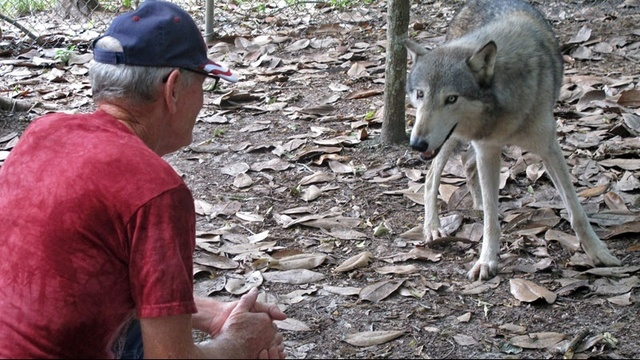 WolfPreserve2-jpg.jpg_27259848