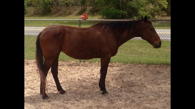 Queen Horse 2_25587058