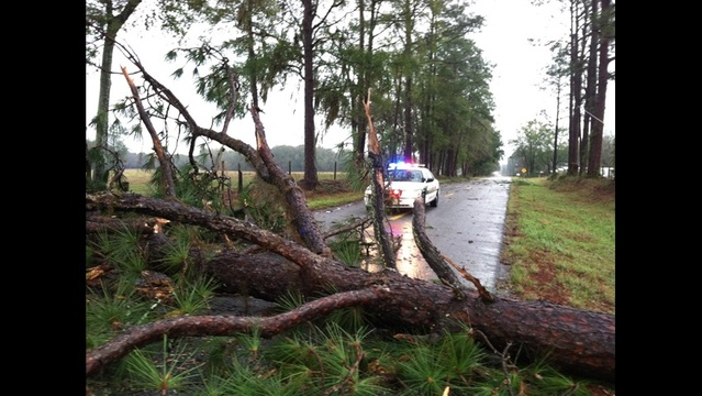 Downed tree on Gabe Street in Lake City