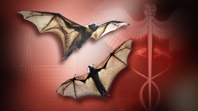 Mayport lifeguard exposed to rabid bat in Duval County