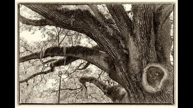 oaktree-jpg--1-.jpg_20186574