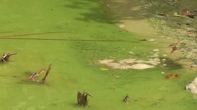 Doctor's algae