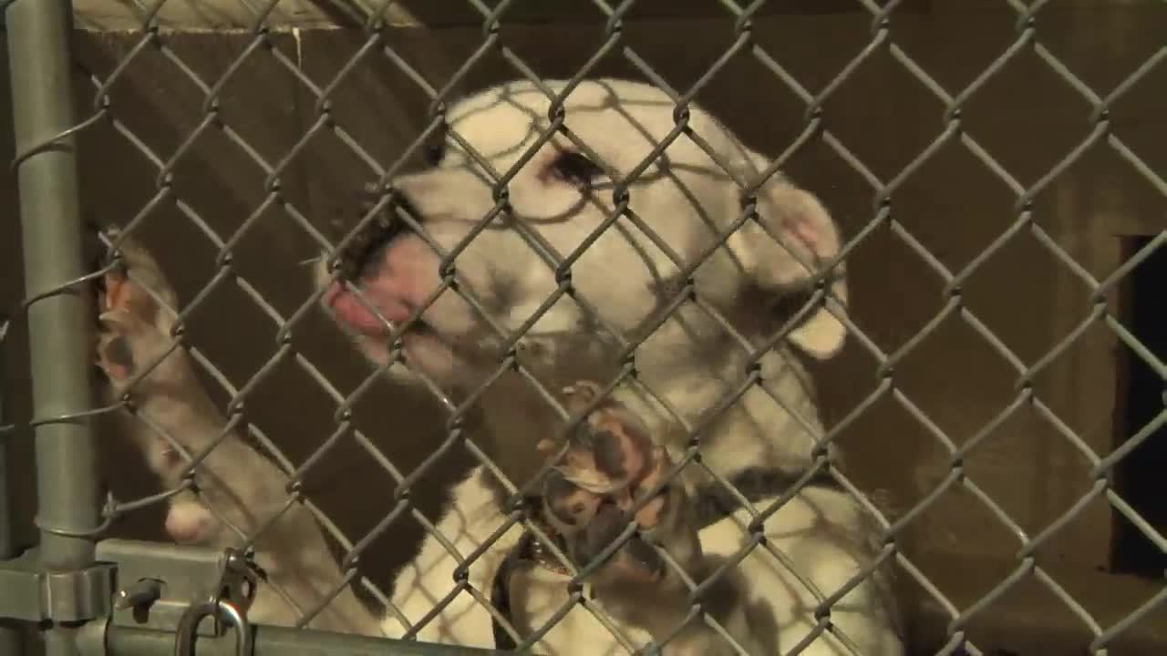 Animal Services | Onslow County, NC
