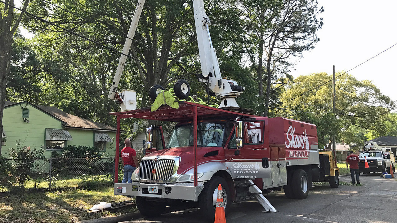 Tree Trimming Electric Power Epb
