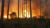 Wildfire in Okefenokee refuge grows past 90 square miles
