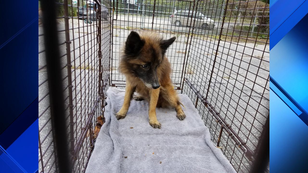 Florida Dog Adoption Laws
