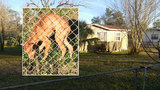 3 dogs left without food, water at Northside home, neighbors say