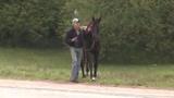Horses running on Atlanta highway blocks traffic