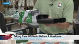 Taking care of your plants before a hurricane