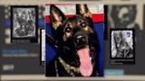 Lawmaker joins fight for tougher penalties for killing police K-9s
