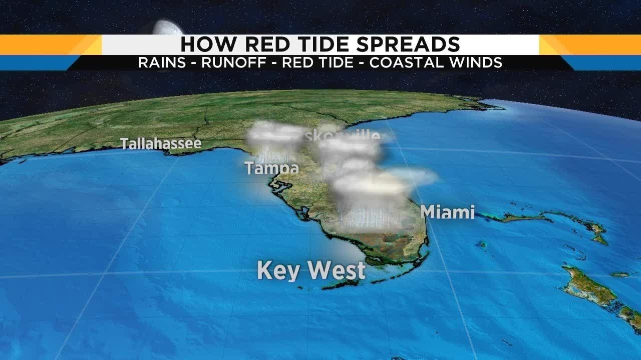 Red Tide Creeping Up Florida S East Coast