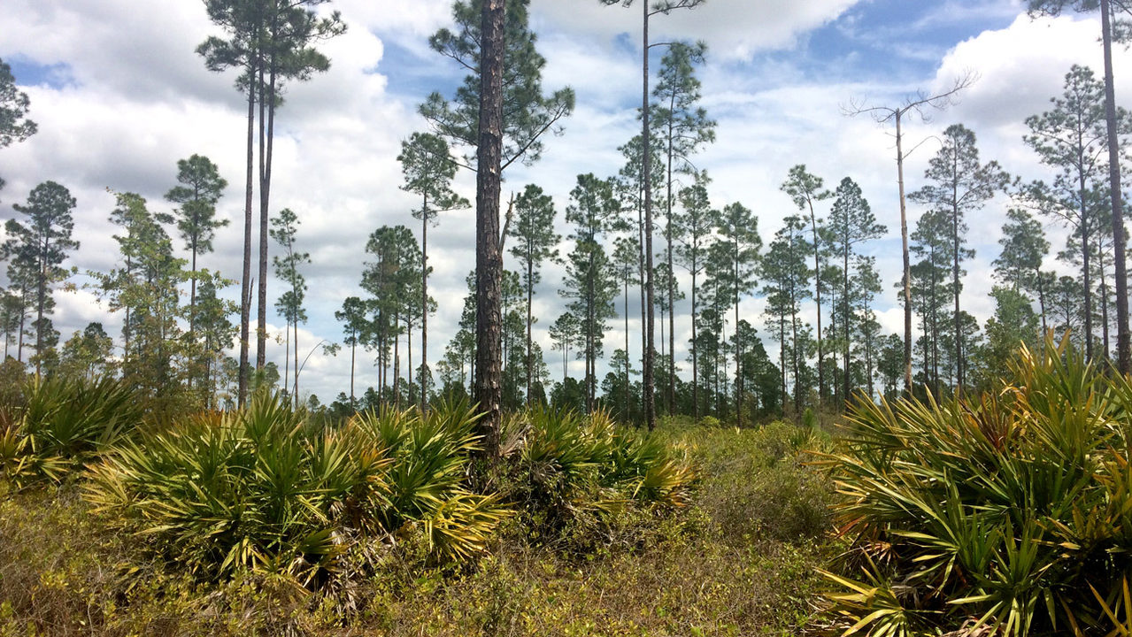 Land conservation group acquires 2,300 acres in critical wildlife corridor