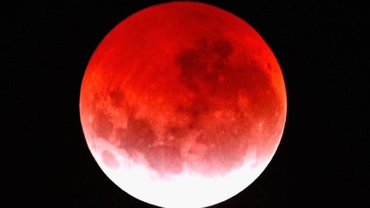 wolf blood moon january 2019 florida - photo #18