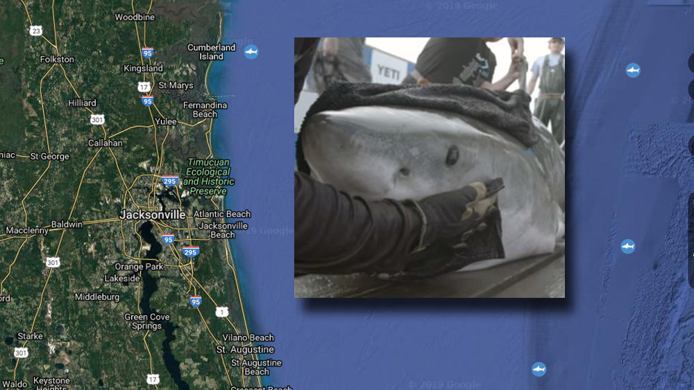 Ocearch tags great white shark of year off North Florida coast