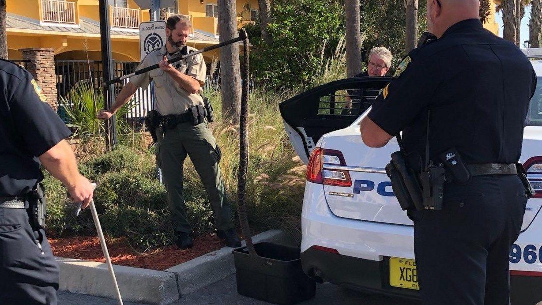 Massive snake captured in Jacksonville Beach