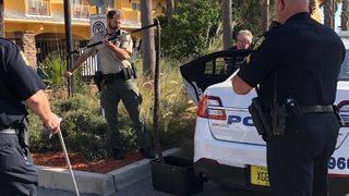 Massive rattlesnake captured in Jacksonville Beach