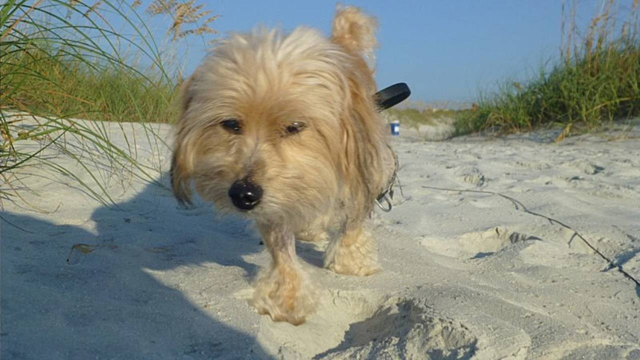 Which Jacksonville-area beaches allow dogs?
