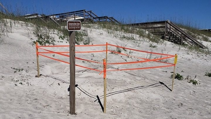 Turtle nesting season starts early after nest found on St Augustine Beach