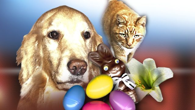 5 tips to keep pets safe during Easter
