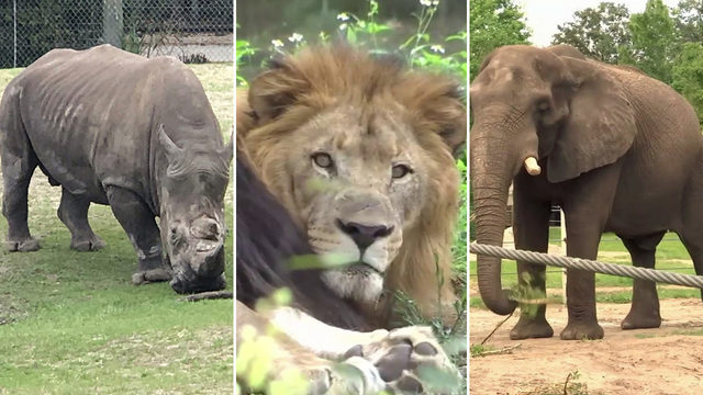 I-TEAM: 3 incidents in year prompt review of Jacksonville zoo's safety